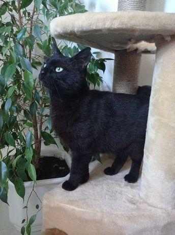 Черная пантера в поиске дома, отдам две молодые черные кошки