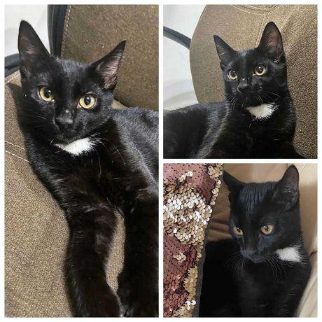 Ласковый котик Уголек, кот, котенок, 4,5 мес