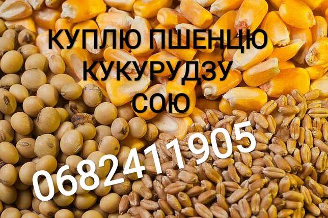 Пшенцю сою кукурудзу