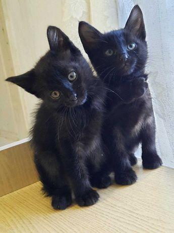 Котята в хорошие ручки