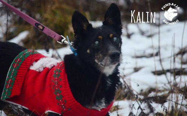 Niewidomy Kalin szuka domu na jesień życia