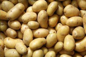 Картофель посадочный,семенной