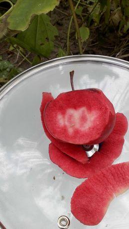 Саженцы красномясых яблонь