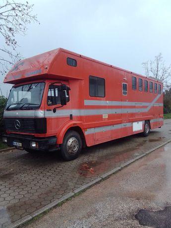 Cavalos / Transporte de cavalos