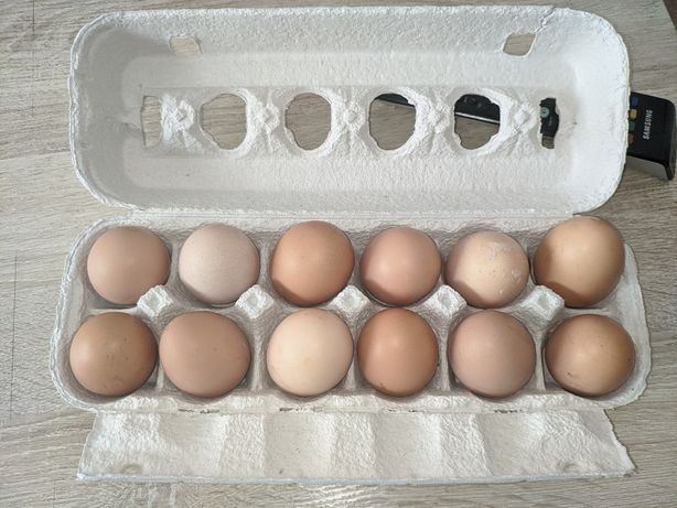 Ovos caseiros dúzia