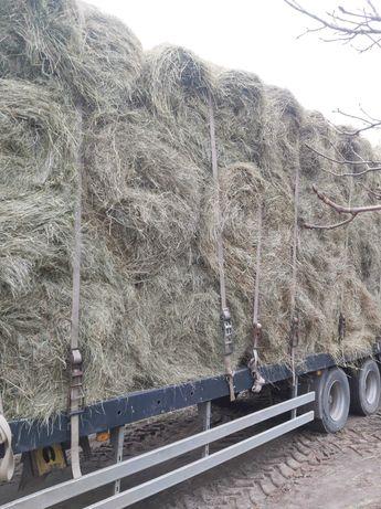 Sprzedam siano suche dla krów koni cena z transportem