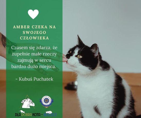 Amber szuka kochających właścicieli!
