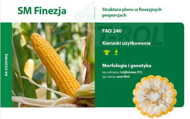 Kukurydza FINEZJA 240 FAO Nasiona Kukurydzy NOWOŚĆ 2021