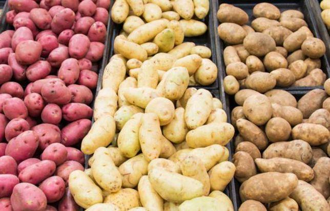 Ziemniaki sadzeniaki po centrali, rożne odmiany, wybierane ręcznie