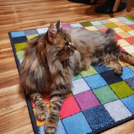 Шикарный сибирский кот в хорошие руки.