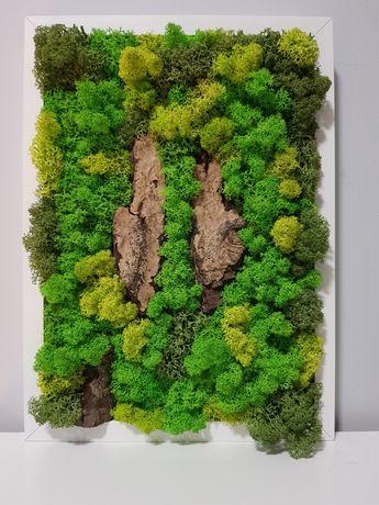 Obraz żywy mech (chrobotek)