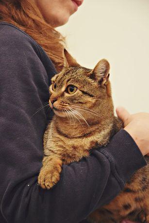 Jej życiem jest ciasna klatka! Uratuj roczną kociczkę! Elżunia czeka!