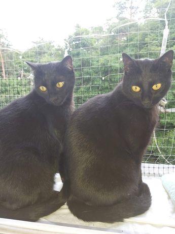 Koty dwaj bracia szukają domu na zawsze