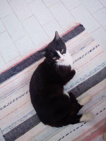 Dou gatos jovens pretos e brancos que são de rua!