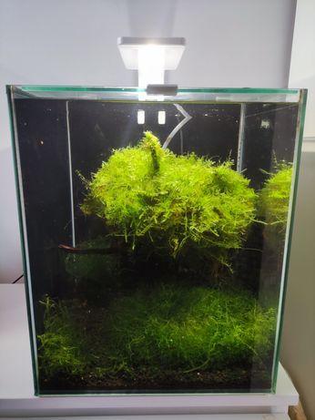 Aquael shrimpset 30l