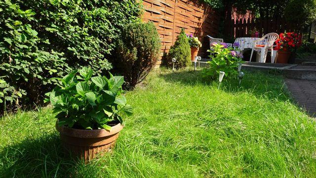 Wynajmę dom z ogródkiem w cenie mieszkania Bez czynszu