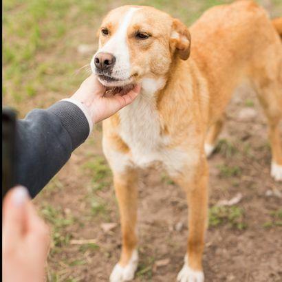 Жизнерадостный щенок Белла ищет своего человека щенок щенки щенята пес
