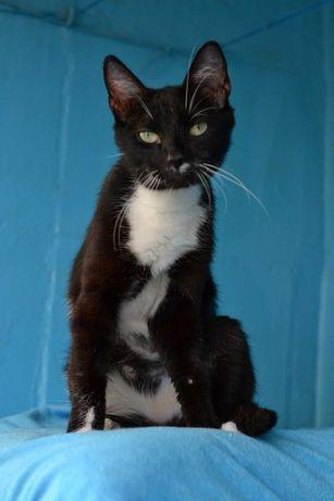 молоденька красива кішечка чорно-білого окрасу 1р