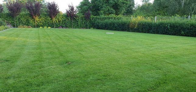 Czarnoziem, torf, ziemia ogrodowa sortowana idealna pod trawnik