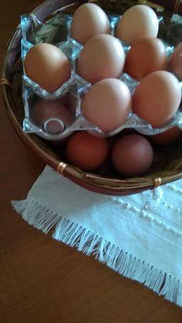 ovos caseiros e frescos