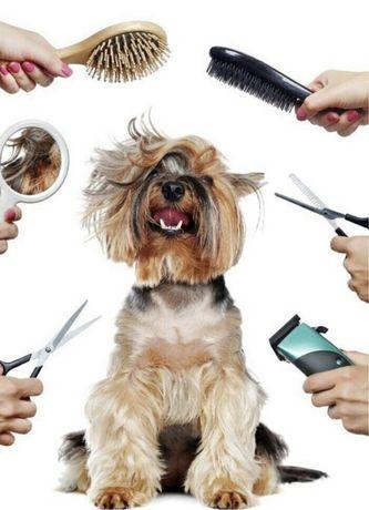 Грумер, стрижка собак, доступные цены
