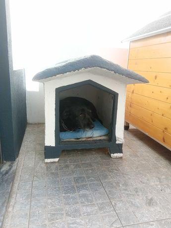 Casota cão porte pequeno
