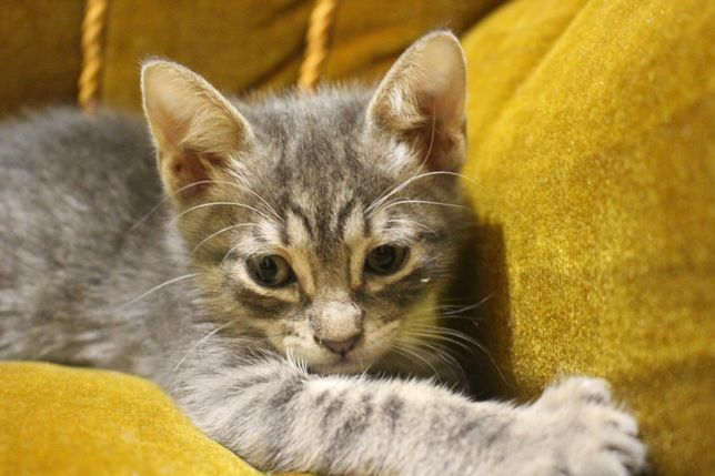 Lindos gatinhos para adoção