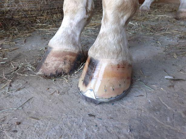 Podkuwanie koni Werkowanie struganie rozczyszczanie