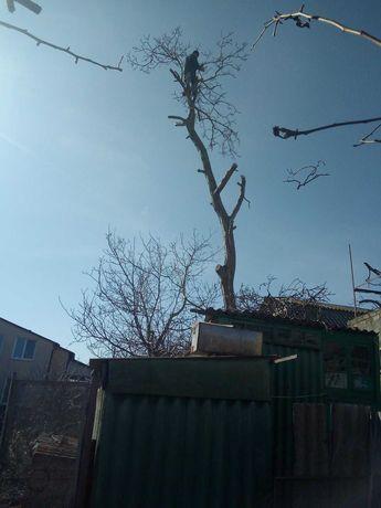 Спил обрезка деревьев. Предоставляем документы