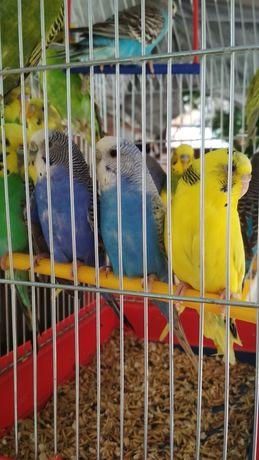 Папугаї різних порід і все що потрібно для них.