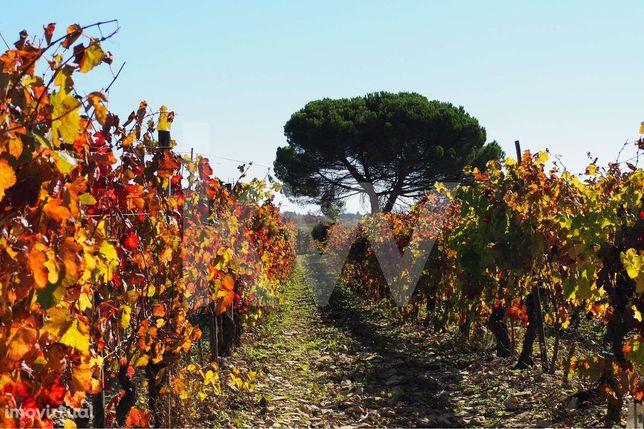 Terreno com Vinhas e Oliveiras   30.000 m2   Com Rentabilidade   Oport