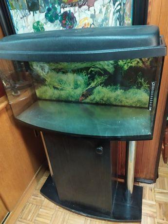 akwarium terrarium wypukłe 80x35x40 nieszczelne + szafka + pokrywa