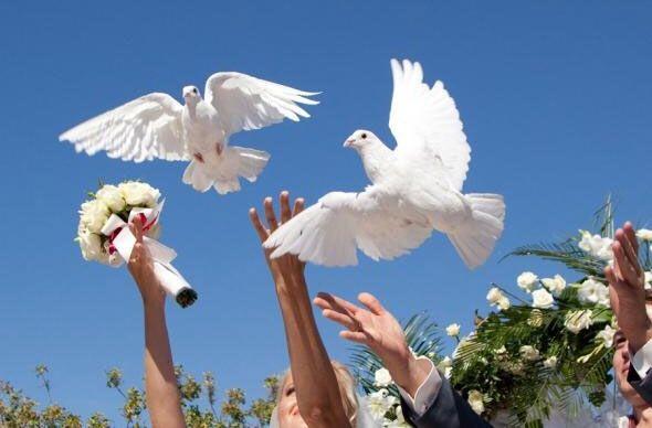 Голуби на весілля