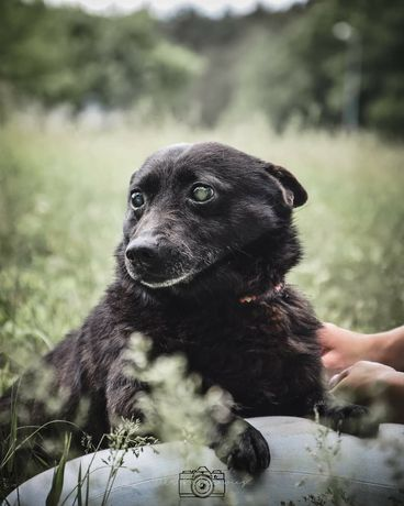 Reksio to niewidomy psiak, który pragnie miłości. Podarujesz Mu dom?