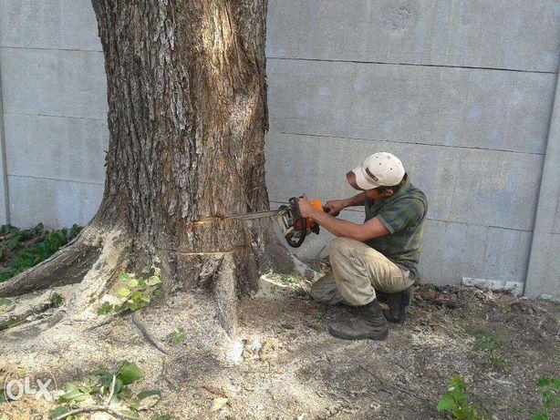 Спилю и вывезу ненужные деревья, дрова .