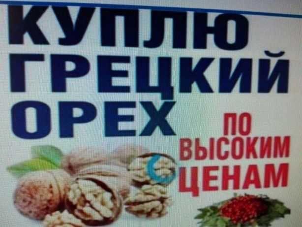 грецкий орех 2021
