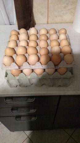 Jaja wiejskie wolny wybieg