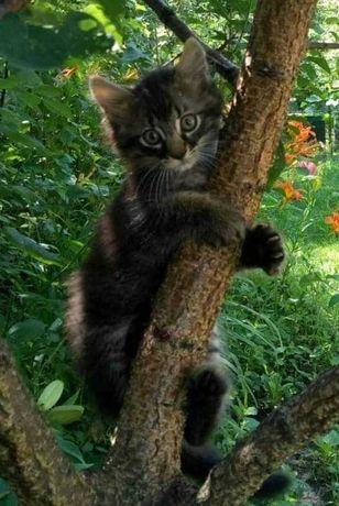 Маленькие котята тигрята девочки возраст 2 месяца идут дом