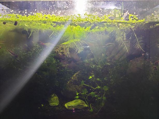 Готовый аквариум 20 литров