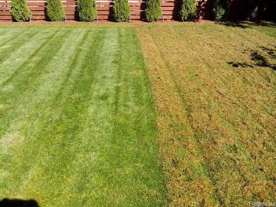 Аерація газону, професійно та якісно!