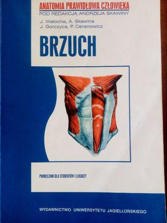 Brzuch - Anatomia Prawidłowa Człowieka - Skawina, Waloch