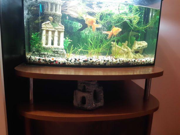 Akwarium panoramiczne z osprzętem, szafką i rybkami