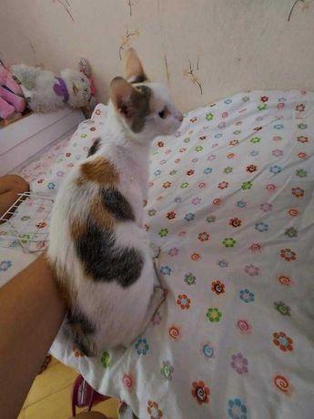 Młoda kotka szuka nowego domku