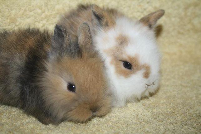 Праздничные кролики на выбор