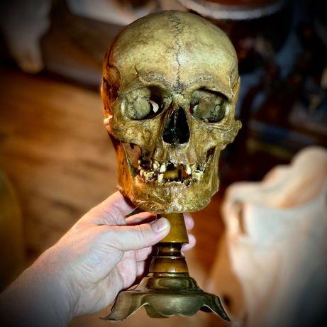 Череп, макет черепу, людський череп, копія черепу