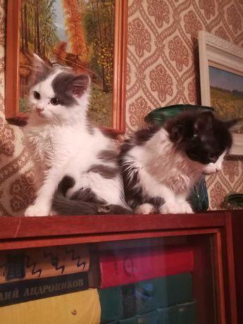 Ми-мишки, пушистые котята в хорошие руки