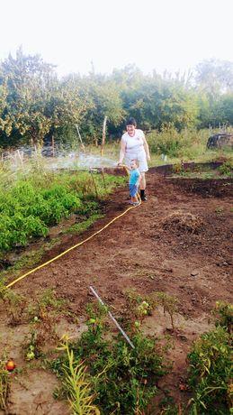 Земля, огород