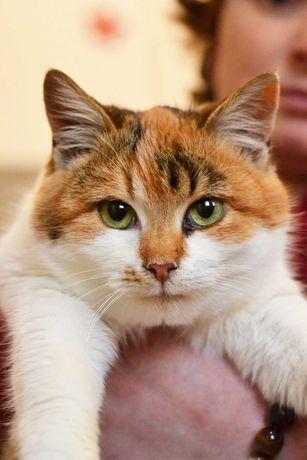 Милая красавица кошка Ваниль (7 месяцев, котенок) ищет дом и семью