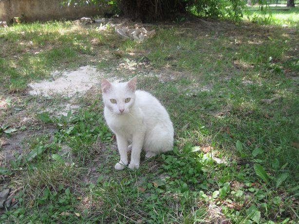 Белый и очень ласковый котик. Кастрирован.