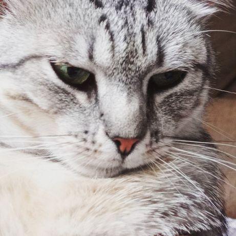 Нужен компаньон и друг для кота